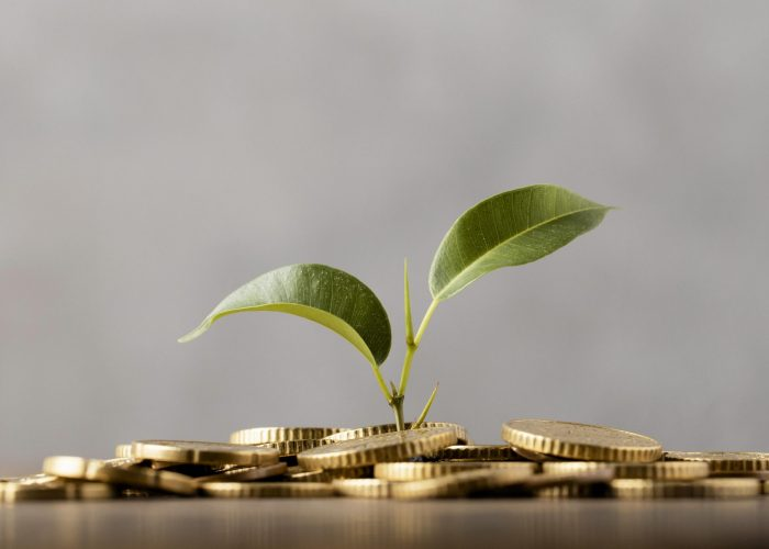 front-view-plant-growing-from-golden-coins
